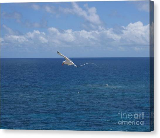 Antigua - In Flight Canvas Print