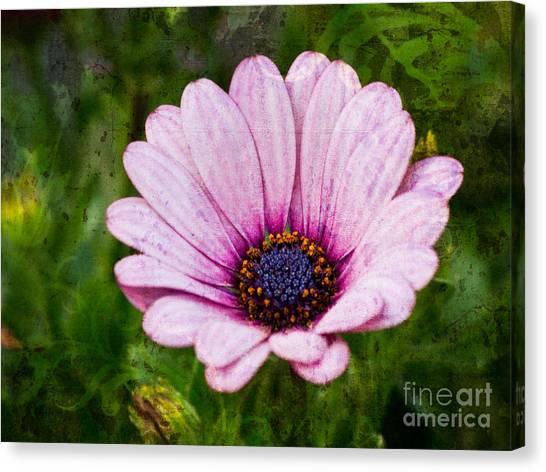 Antique Flower Canvas Print by Lutz Baar