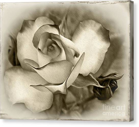 Antique Rose Canvas Print