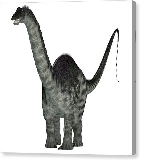 Brontosaurus Canvas Print - Apatosaurus Dinosaur, Front View by Corey Ford