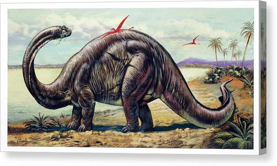 Brontosaurus Canvas Print - Apatosaurus With Pterosaurs by Deagostini/uig