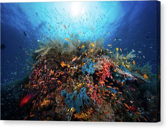 Coral Reefs Canvas Print - Apnea by Barathieu Gabriel