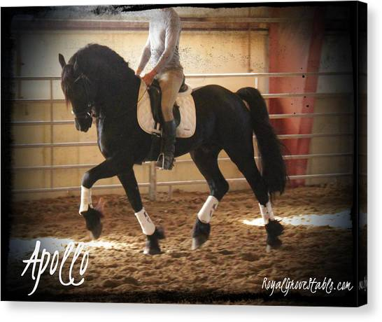 Apollo Friesian Stallion Canvas Print