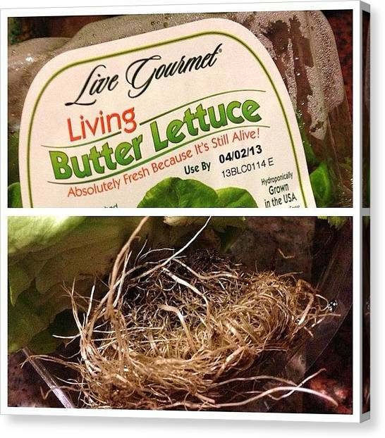 Lettuce Canvas Print - Apparently My #lettuce That @nicifrench by Sandra Bilokonsky