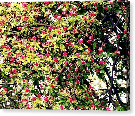 Apple Tree Canvas Print - Apple Blossom by Mary Kritschgau