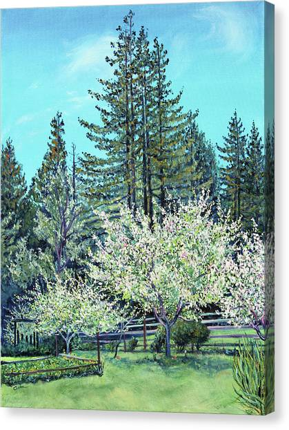 Apple Blossoms And Redwoods Canvas Print