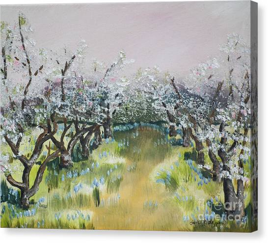 Apple Blossoms In Ellijay -apple Trees - Blooming Canvas Print