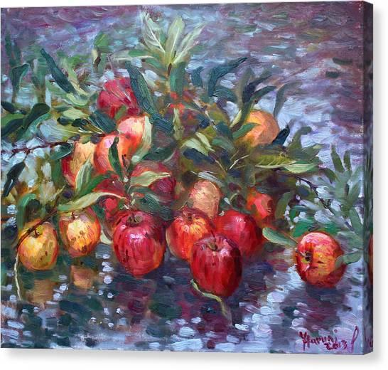 Harvest Canvas Print - Apple Harvest At Violas Garden by Ylli Haruni
