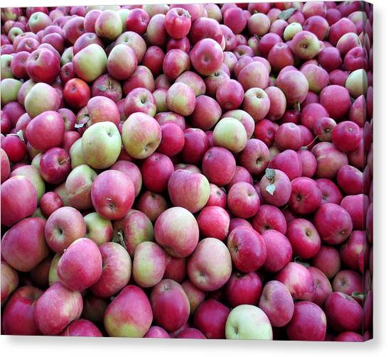 Corn Maze Canvas Print - Apple Harvest by Brooke Finley