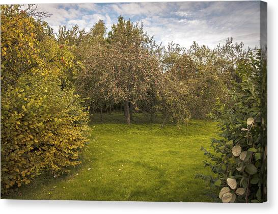 Fruit Trees Canvas Print - Apple Orchard by Amanda Elwell