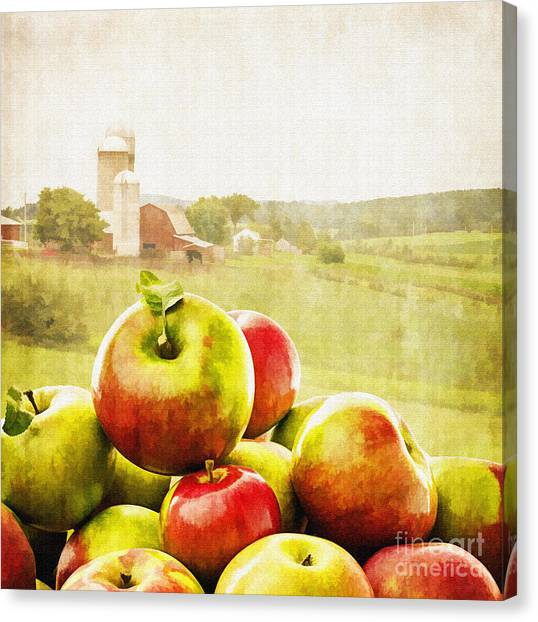 Vermont Canvas Print - Apple Picking Time by Edward Fielding
