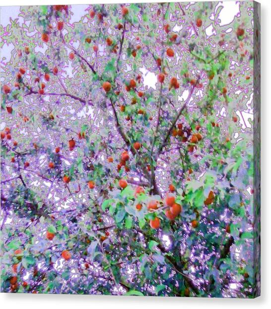 Fruit Trees Canvas Print - Apple Tree/red Edit by Candy Floss Happy
