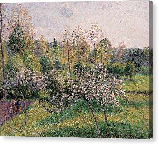 Fruit Trees Canvas Print - Apple Trees In Blossom by Camille Pissarro