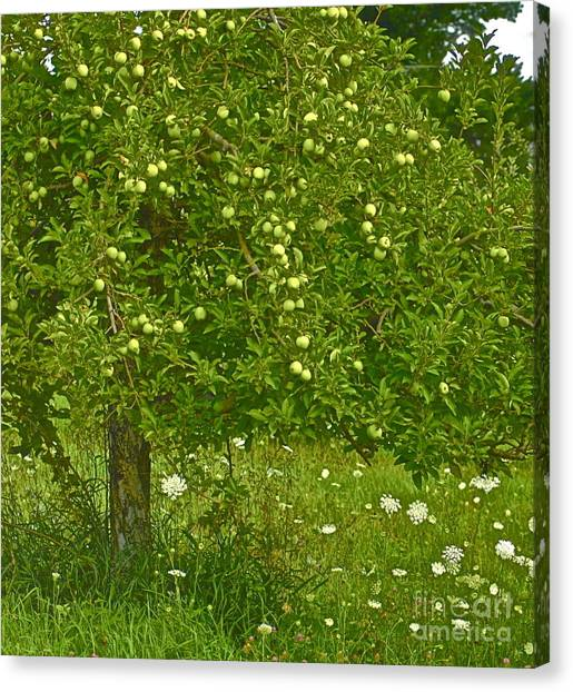 Apples In The Wild Canvas Print