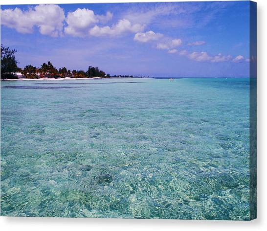 Rum Canvas Print - Aqua Blue by Carey Chen