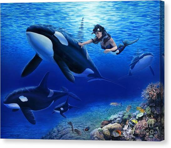 Orcas Canvas Print - Aquaria's Orcas by Stu Shepherd
