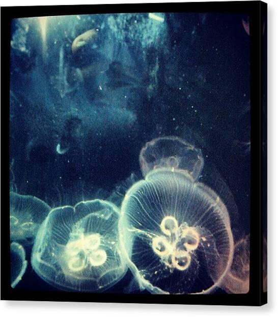 Ocean Life Canvas Print - Jellyfish Are Beautiful  by Jillian  Lane