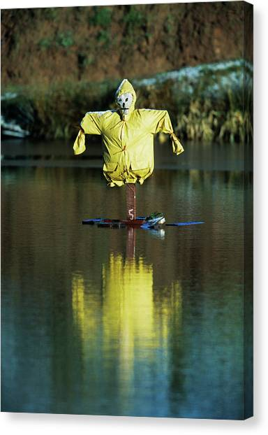 Pest Canvas Print - Aquatic Scarecrow by Andy Harmer/science Photo Library