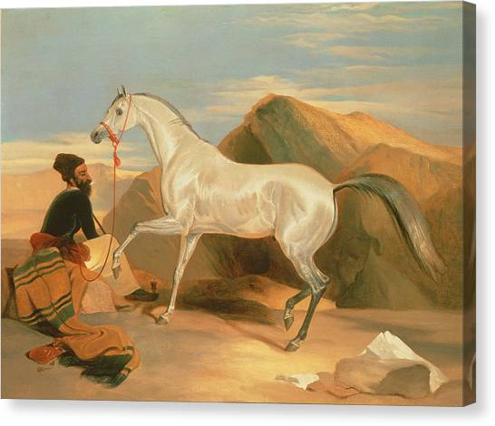 Arabian Desert Canvas Print - Arab Stallion by Sir Edwin Landseer