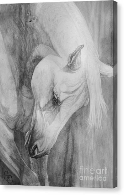 Arabian Canvas Print - Arabian Gentleness by Silvana Gabudean Dobre
