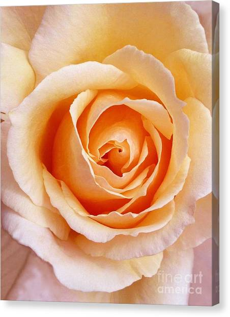 Aranciata Rose Blossom Canvas Print
