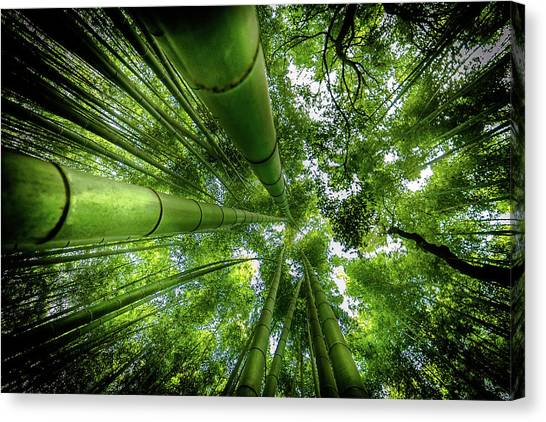 Bamboo Canvas Print - Arashiyama by David Ros