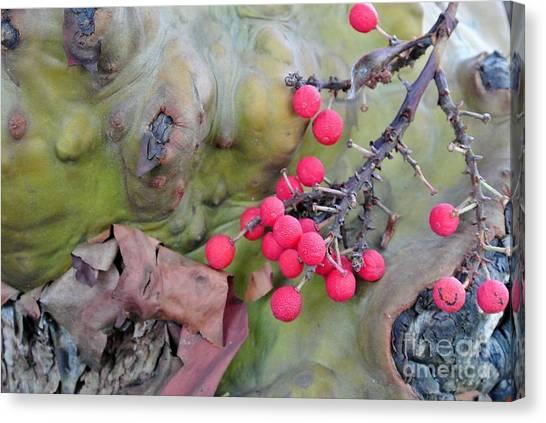 Arbutus Berries Canvas Print