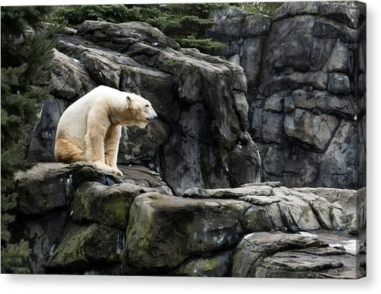 Arctic Bear Canvas Print