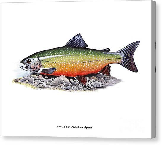 Arctic Char Male Canvas Print