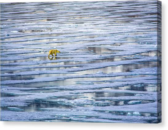Arctic Journey Canvas Print