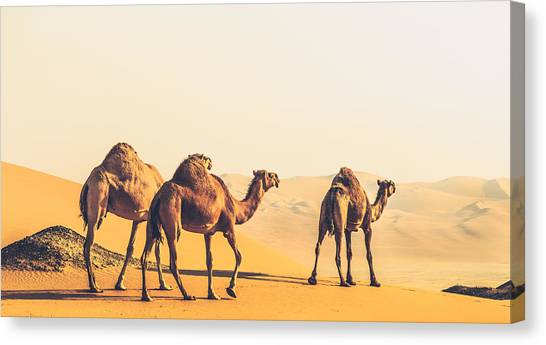 Are We Lost  Canvas Print by Ahmed Rashed