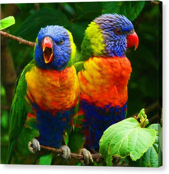 Are You Listening - Rainbow Lorikeets Canvas Print