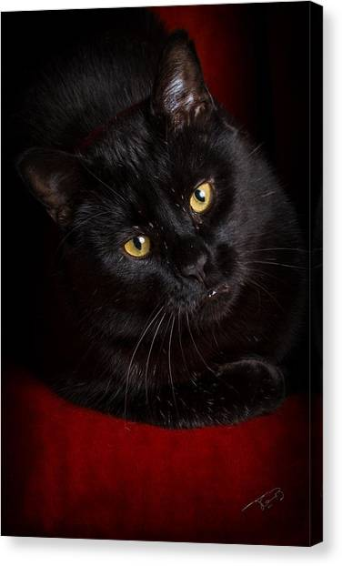 Aren't I Too Beautiful To Behold Canvas Print by Tom Buchanan