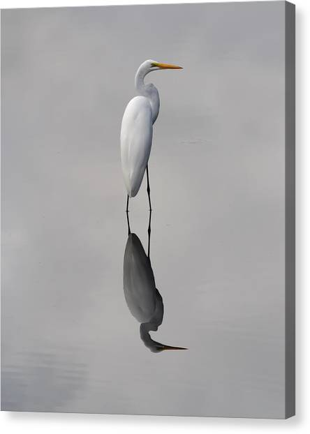 Argent Mirror Canvas Print