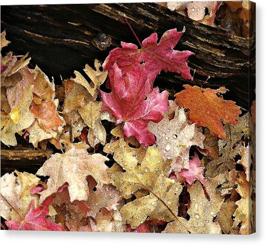 Arizona Fall Colors Canvas Print
