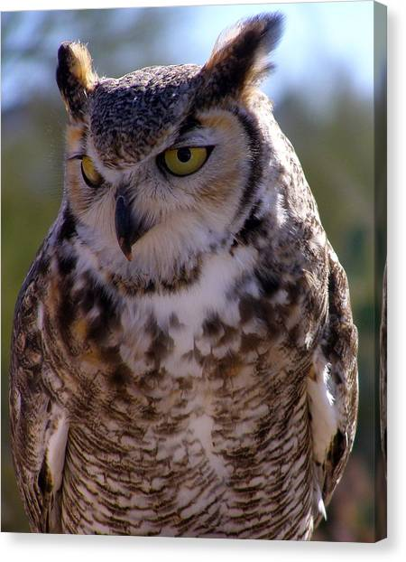 Arizona Owl Visit  Canvas Print