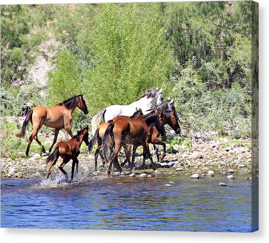 Arizona Wild Horse Family Canvas Print