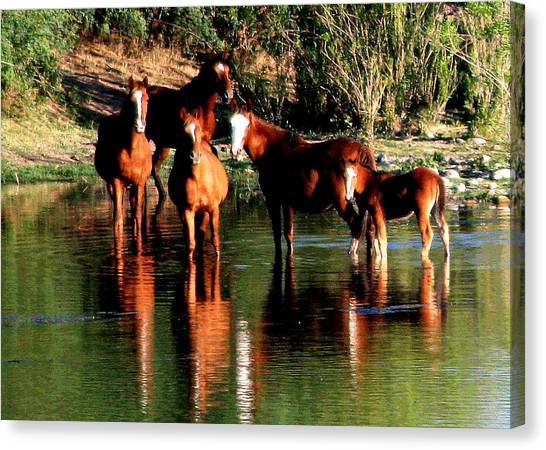 Arizona Wild Horses Canvas Print