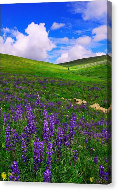 Aroma Of Summer Canvas Print