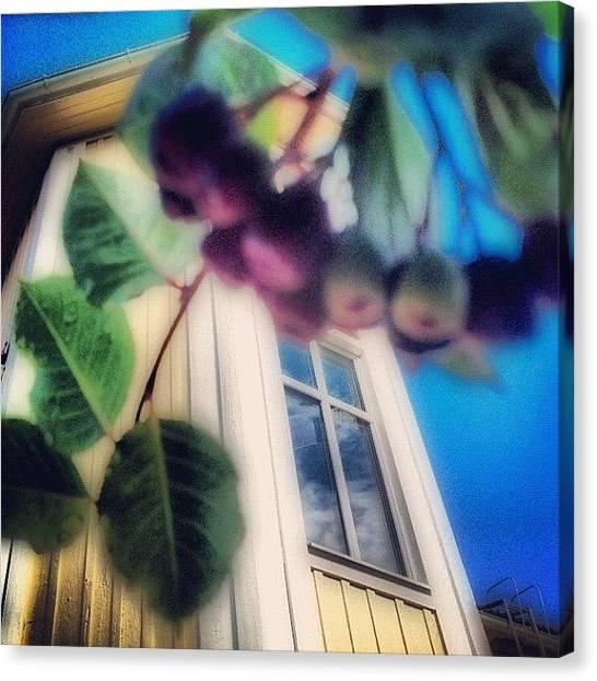 Music Canvas Print - #aronia #buske #trädgård #hus #hem by Carina Ro