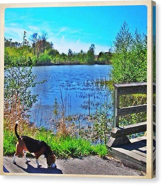 Wetlands Canvas Print - Around The Pond by Stefanie Roberts