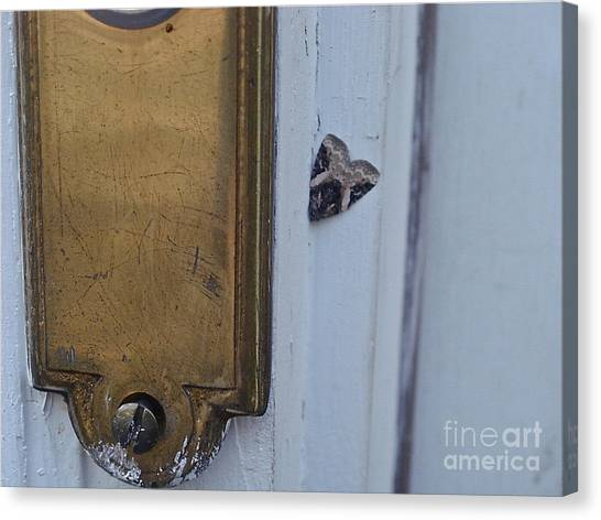 Arrowhead Doorbell Moth Canvas Print