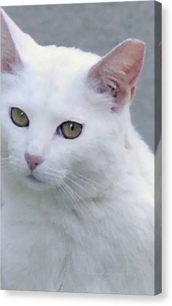 Canvas Print featuring the photograph Art Cat by Kristi Swift