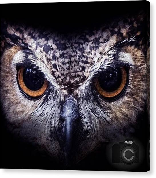Owls Canvas Print - Art With The Owl Face by David Lopez