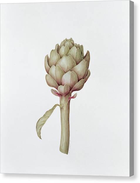 Artichoke Canvas Print - Artichoke by Diana Everett