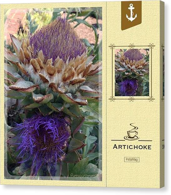 Artichoke Canvas Print - Artichoke In The Herb Garden by Anna Porter