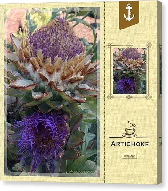 Artichoke Canvas Print - Artichoke In The Herb Garden by Anna Porter