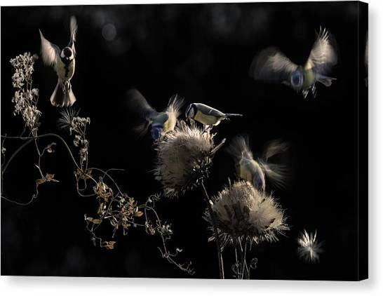 Flying Canvas Print - Artichokes Hearts by Martine Benezech