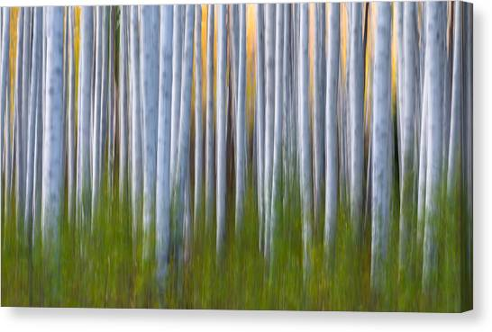 Grove Canvas Print - Artistic Aspens 2 by Larry Marshall