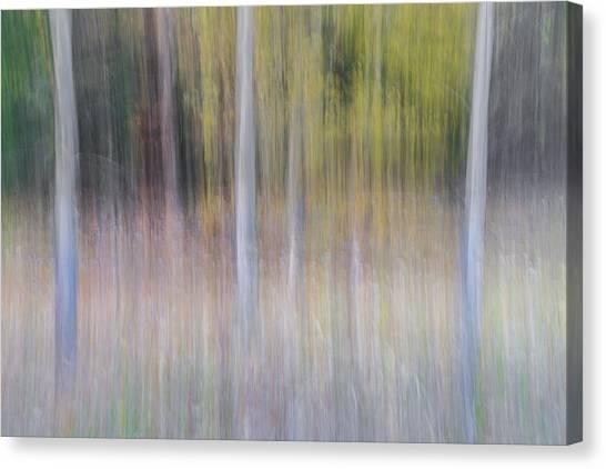 Birch Canvas Print - Artistic Birch Trees by Larry Marshall